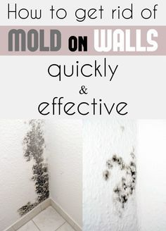 How To Get Rid Of Mold On Walls Quickly And Effectively Cleaning Ideas