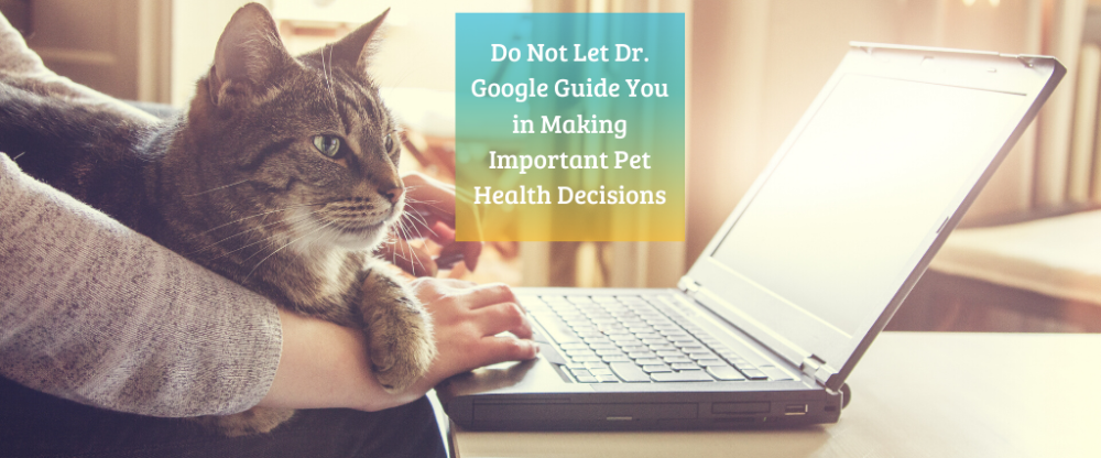 """Are You Still Using """"Dr. Google"""" For Your Pet? Stop Now"""