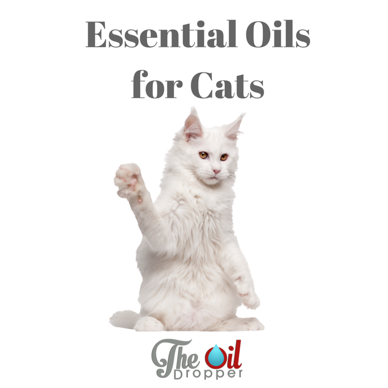 Can You Use Essential Oils With Cats? Essential oils
