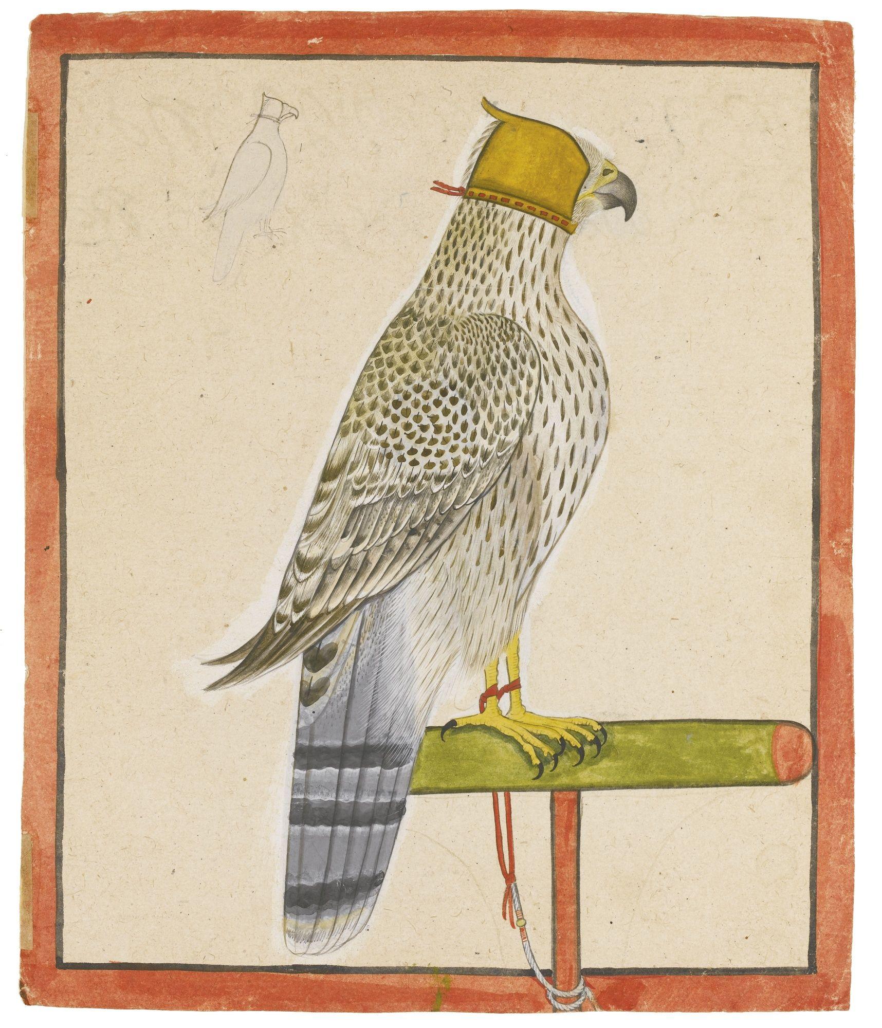 A favourite falcon of Raja Balwant Singh of Jasrota, attributed to Nainsukh of Guler, Jasrota, dated 1737