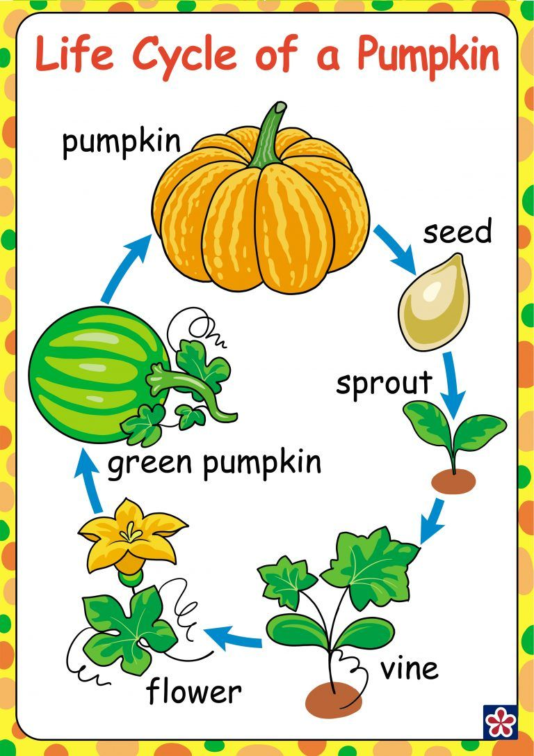 Free Printables Of The Parts And Life Cycle Of A Pumpkin Teachersmag Com Fall Preschool Activities Pumpkin Activities Preschool Pumpkin Life Cycle [ 1086 x 768 Pixel ]