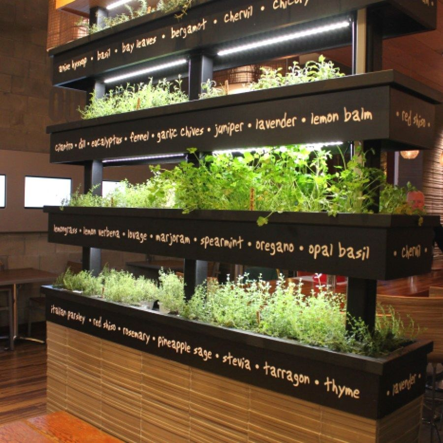 Lyfe Kitchen Palo Alto Ca: Creative Indoor Herb Garden Ideas You Should Try Herb