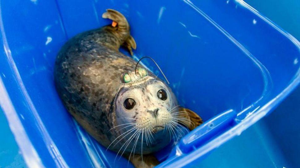 14++ Seal beach animal care center ideas in 2021