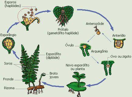 Pin De Andrea Em Poster Biologia Fisiologia Vegetal E Reino Das