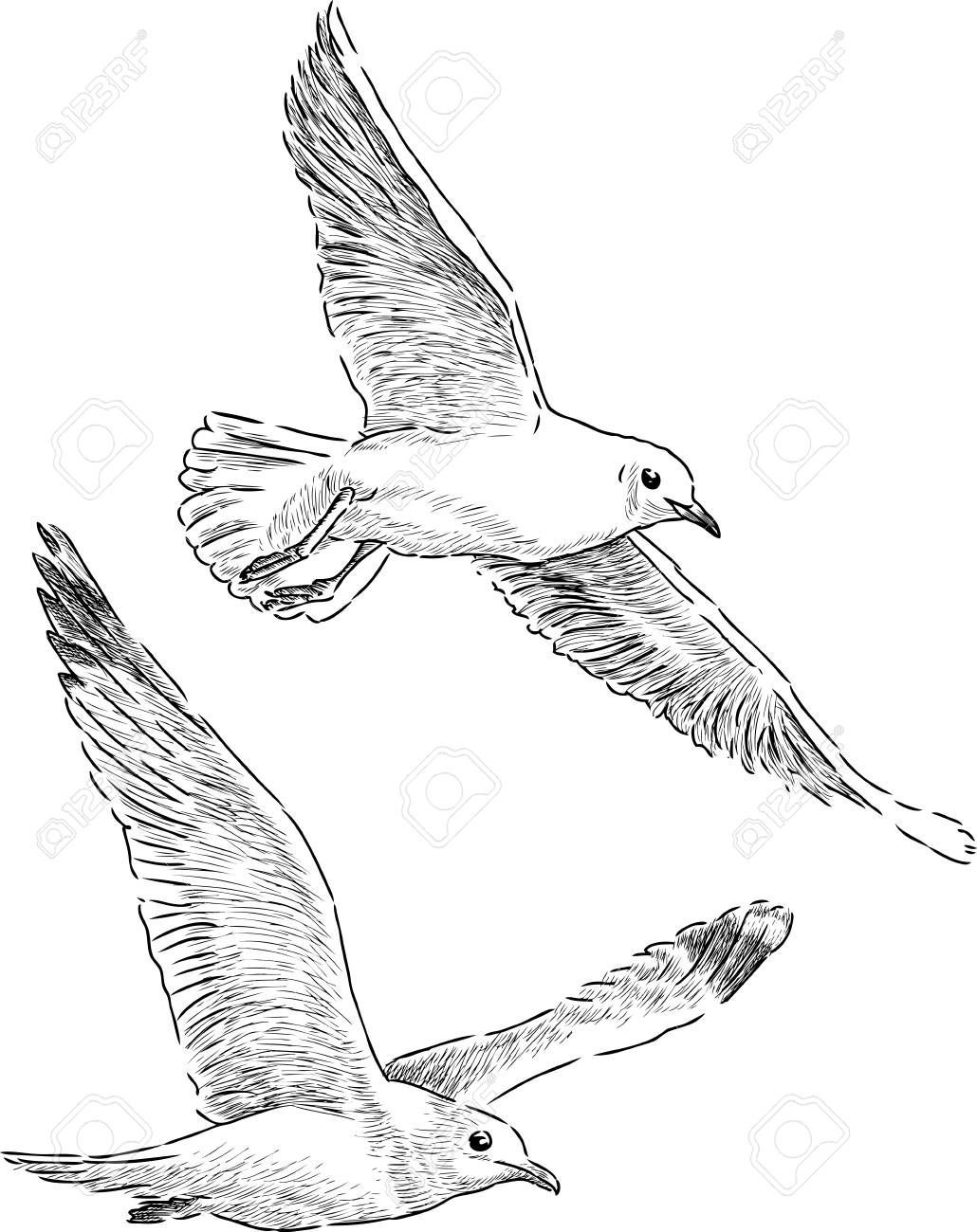 Hand Drawing Of The Seagulls In Flight Ad Drawing Hand Flight Seagull Drawing Flight Hand Seagu Bird Drawings Fly Drawing Seagull Tattoo