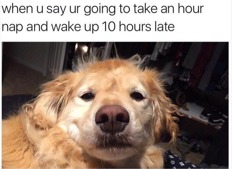 When You Say Youre Just Going To Take A Nap But Then Wake Up Ten Hours Later Funny Pictures With Captions Pic Funny Dog Memes Funny Animal Memes Funny Pictures