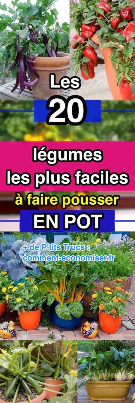 Les 20 Legumes Les Plus Faciles A Faire Pousser En Pot