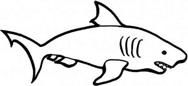 A Simple Drawing Of Blue Shark Coloring Page Kids Play Color Easy Drawings Shark Coloring Pages Animal Drawings