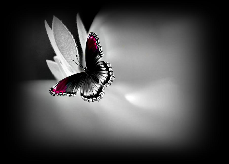 Artizan3 Color Splash Butterfly Photo