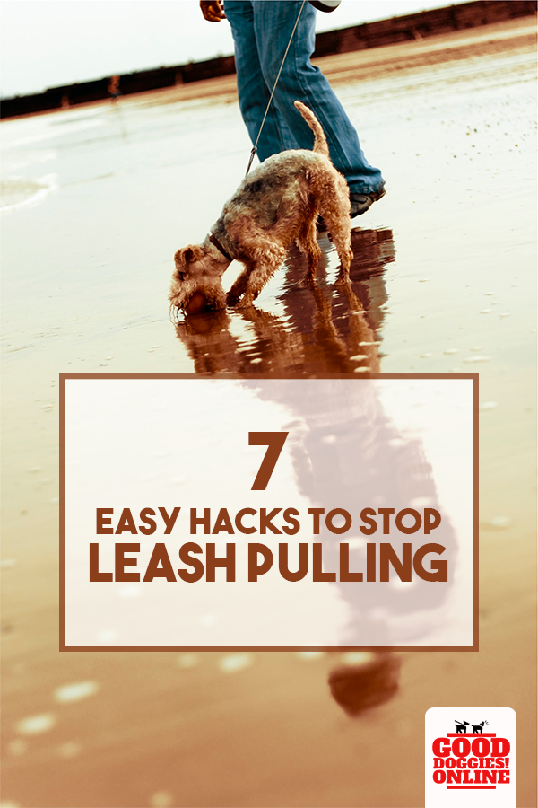 Here's how you can get your dog to stop pulling his or her leash while walking.      #gooddoggies #dog #puppy #pull #leash #hack #dogowner #doglover #walk