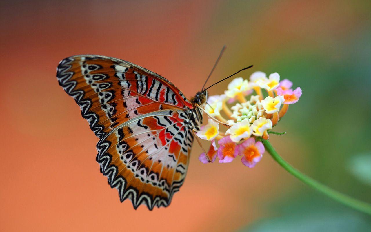 Most Inspiring Wallpaper Butterfly Spring - 8ea70e0e37b5799b97b61362f408ec90  Perfect Image Reference_433463.jpg