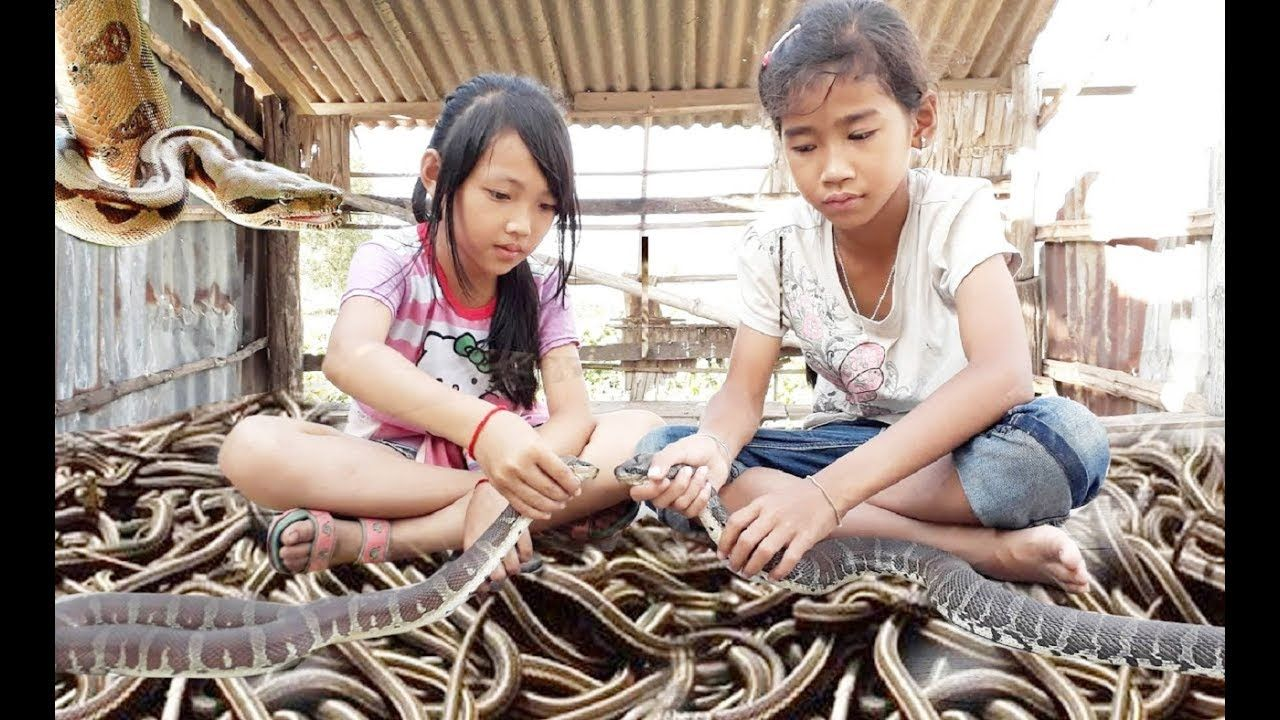 Brave children catch big snake by hand easily