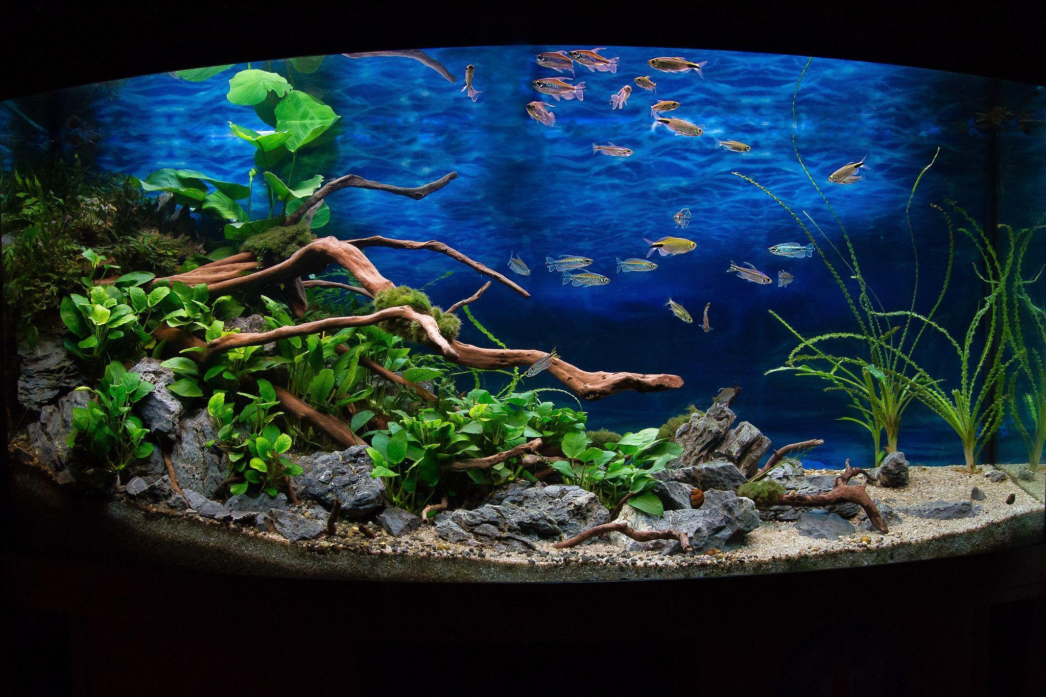 Concours 2014 Aquarium Ideeen Aquarium