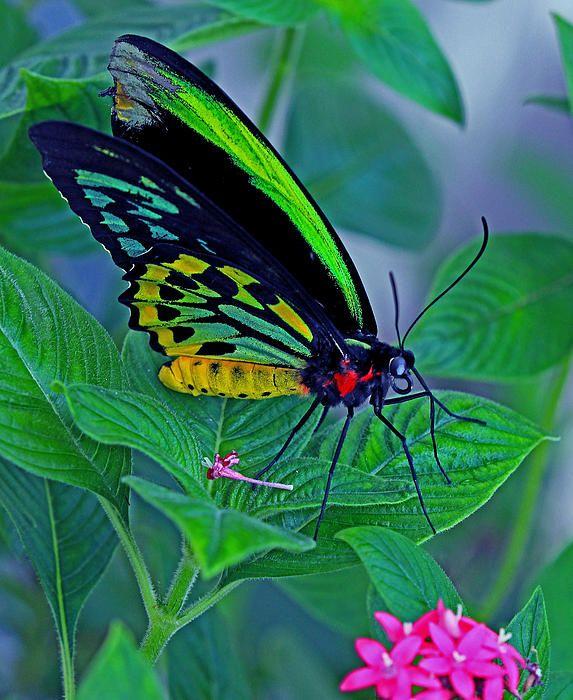 .Butterflies...