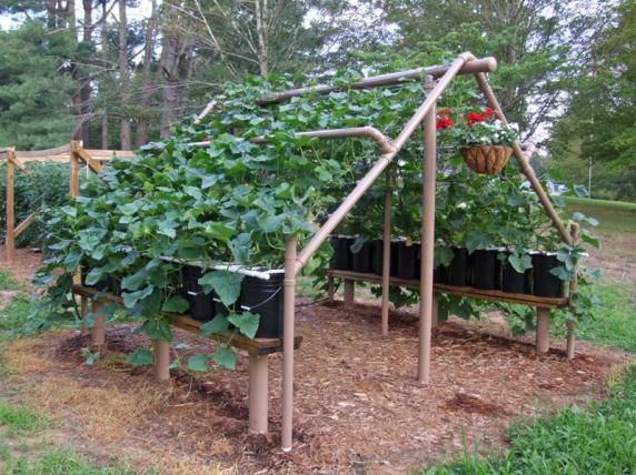 Cucumber pvc support and trellis
