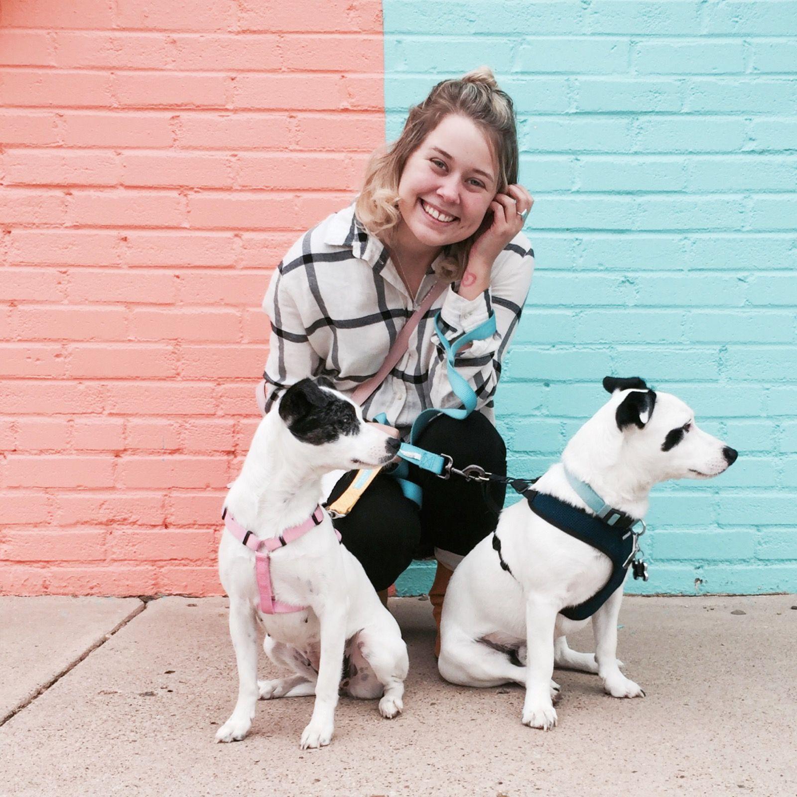 Locke of Lubbock — Monica Prado Boston terrier, Lubbock
