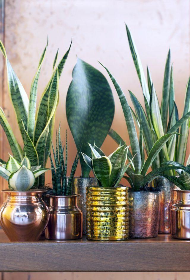 Plantes d polluantes entretien facile purifiez l air en - Belle mere dans la salle de bain ...