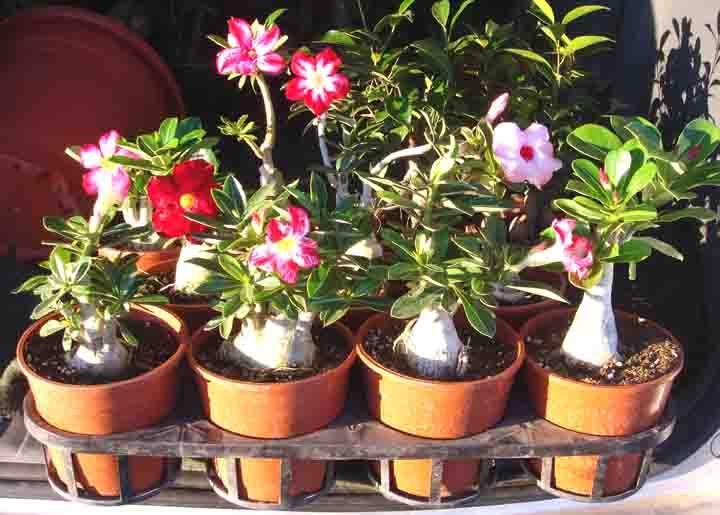 how to make tomoatos plant germinate