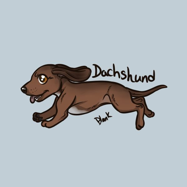 Pin By Katelyn Rodriguez On Dachshunds (With Images