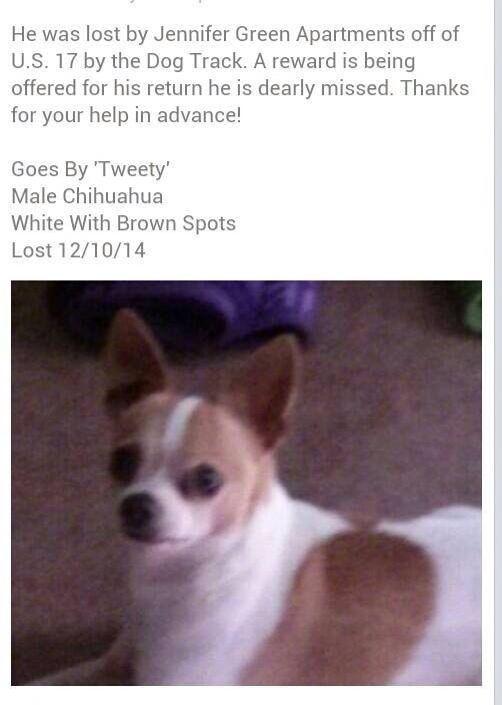 Lostdog 12 10 14 Tweedy Jacksonville Fl Chihuahua Male White