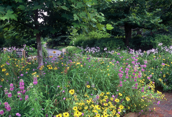 a display of the beauty of illinois wildflowers - Flower Garden Ideas Illinois