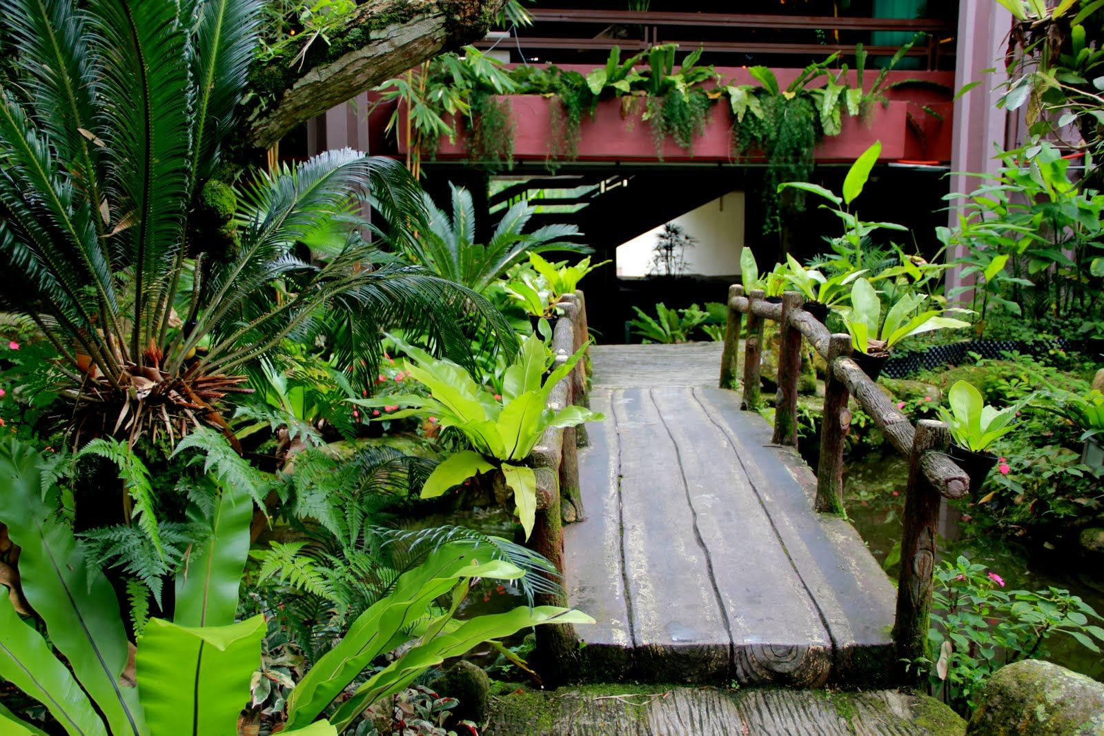 courtyard tropical garden garden landscape tropical