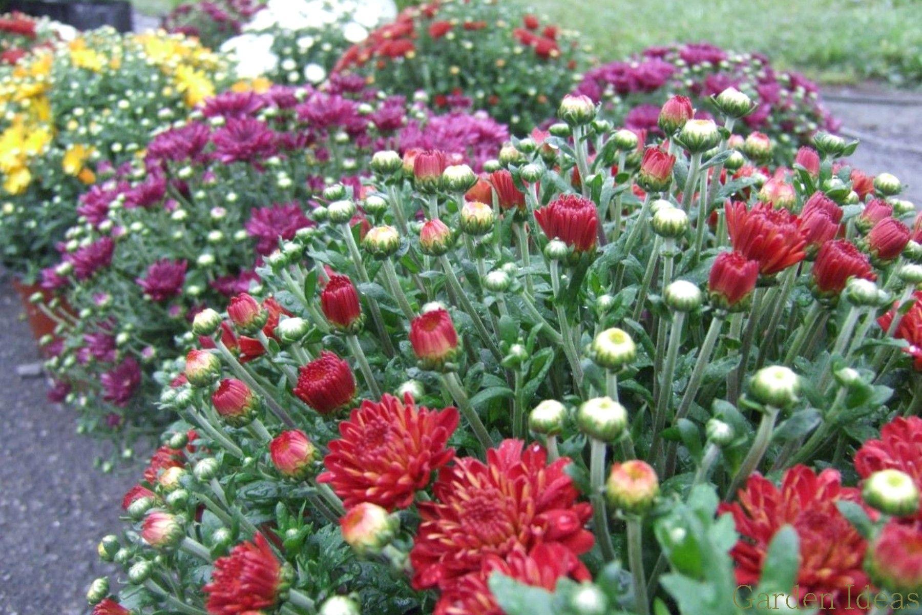 The Best Garden Flower Photo I Love This Plant Wonderful Design Ideas Plan Your Garden Plants Vegetable Gardens Modern