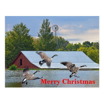 Merry Christmas Canada Geese Landing On The Pond Holiday Postcard Zazzle Com Holiday Design Card Christmas Postcard Holiday Postcards