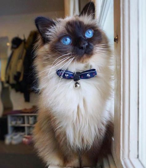 Funny Cat Cats Pets Beautiful Cats