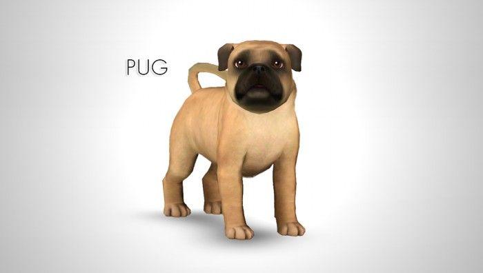 Pin By Jenni Manning On Pug Life Pugs Dog Breeder Pug Dog