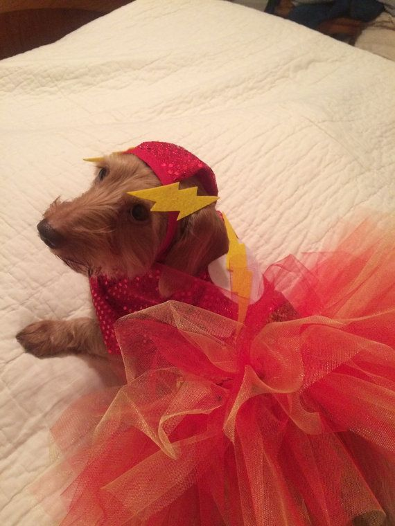 Dog Dachshund Superhero Flash Girl Costume Tutu Dress Comes