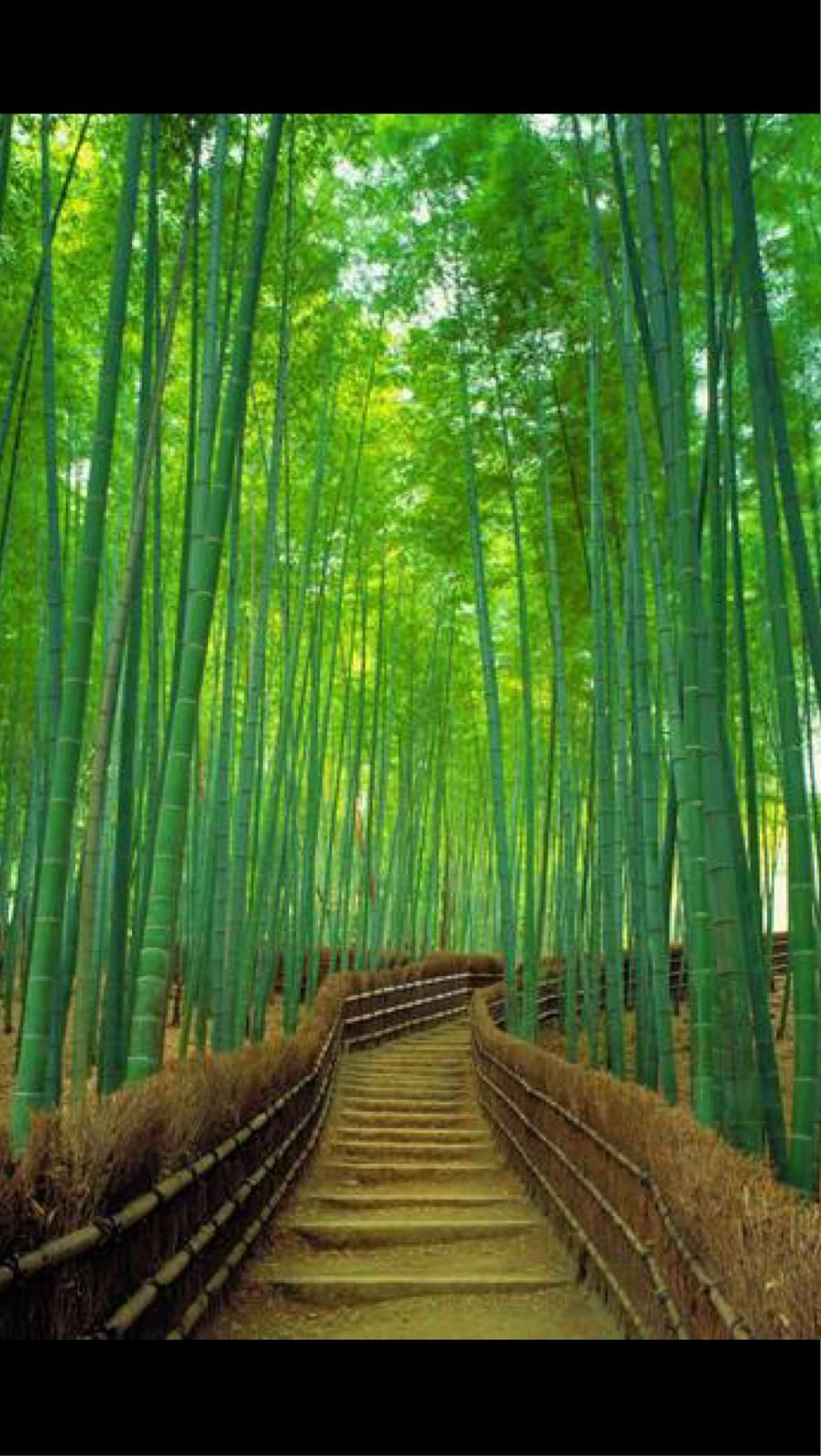 Bamboo Forest In 2020 Bamboo Forest Stunning Wallpapers Bamboo