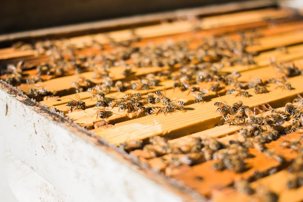 How Much Space Does a Beehive Need? in 2020 | Bee hive ...