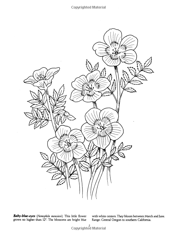 Favorite Wildflowers Coloring Book Dover Nature Ilil Arbel Books