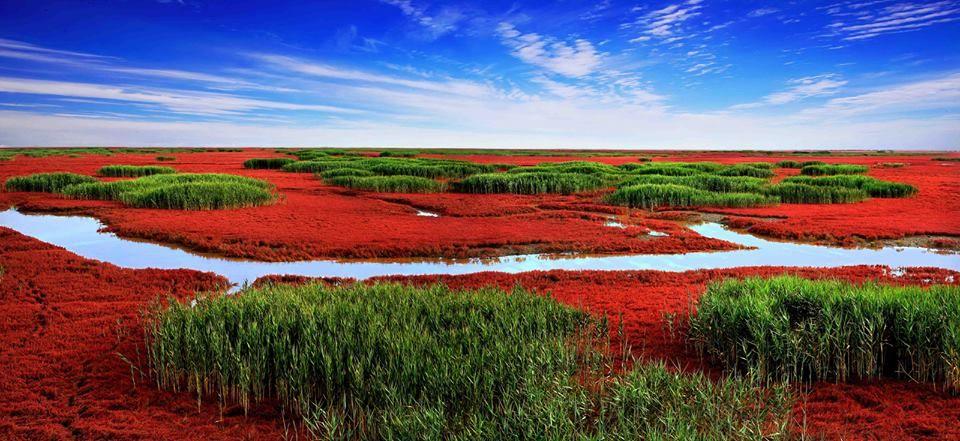 Praia Vermelha de Panjin, China.