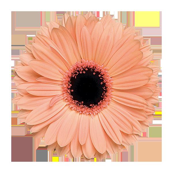 Pin Em Flowers
