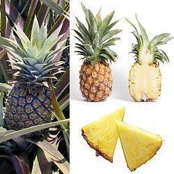 Ananas – Wikipedia