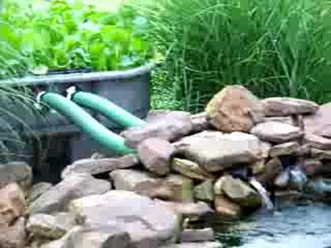 kcvers How to have a clear koi pond water garden part 2