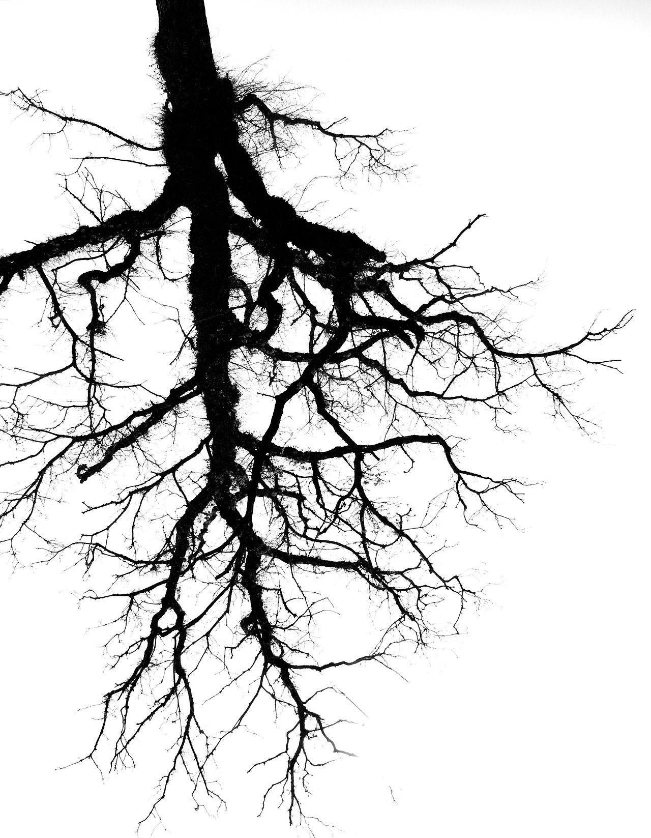 Tumblr Black And White Tree Roots Tattoo Lungs Drawing