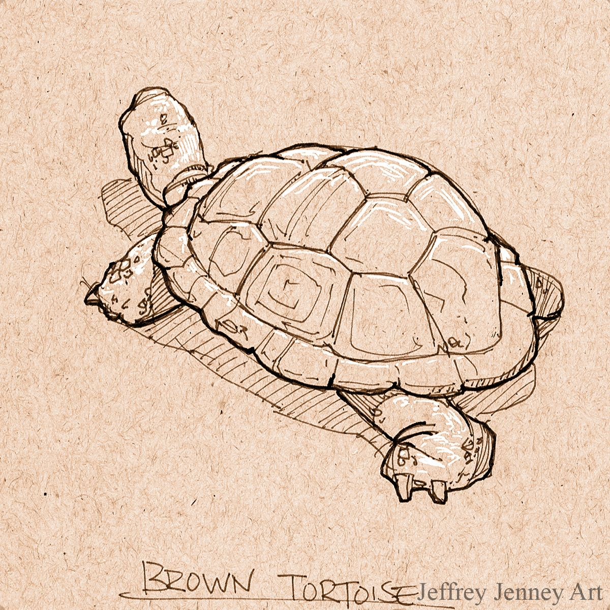 Brown tortoise pen and ink animal drawings from the zoo in 2019