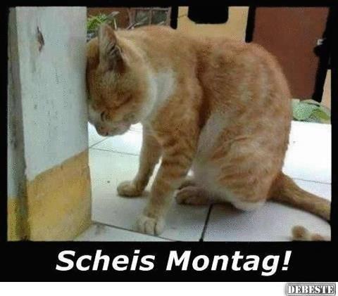 Scheiss Montag ! | DEBESTE.de, Lustige Bilder, Sprüche ...
