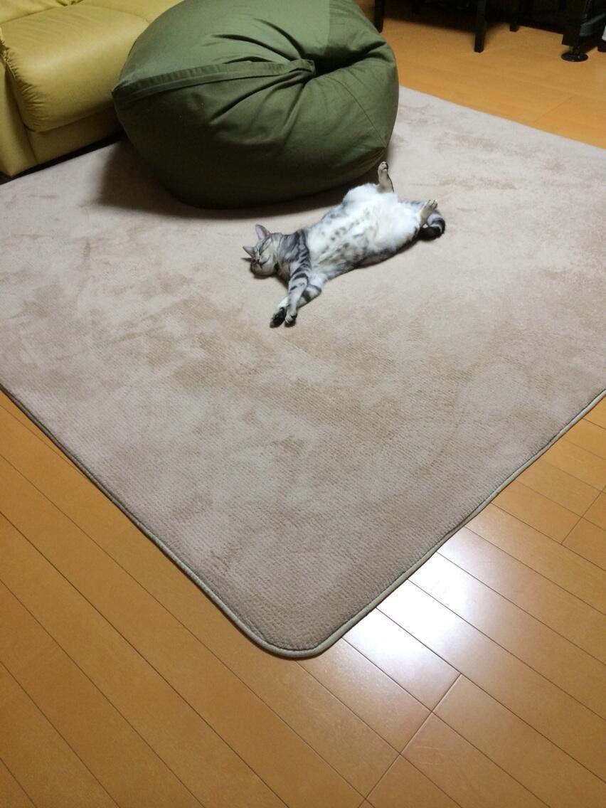 """紫音さんのツイート: """"ダメにするソファに辿り着く前にダメになった猫 https://t.co/gBp4g0iLdW"""""""