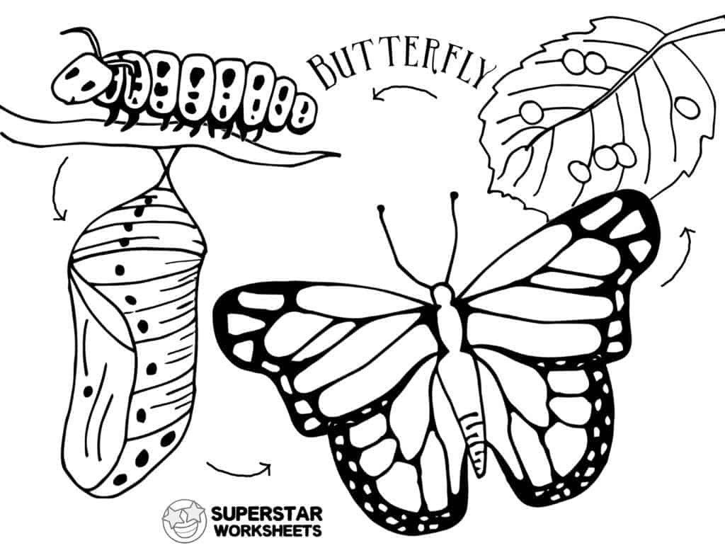 Butterfly Worksheets For Kindergarten Butterfly Worksheets