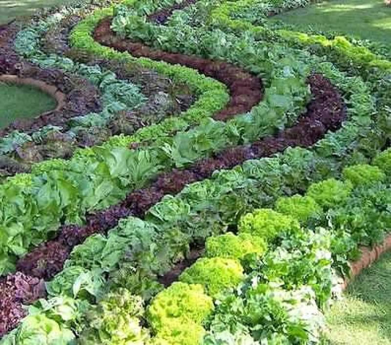 Vegetable Garden, Edible
