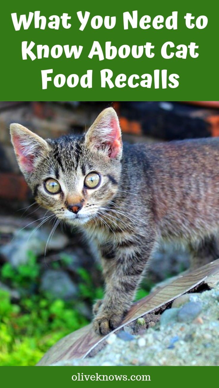 What You Need to Know About Cat Food Recalls Cat food