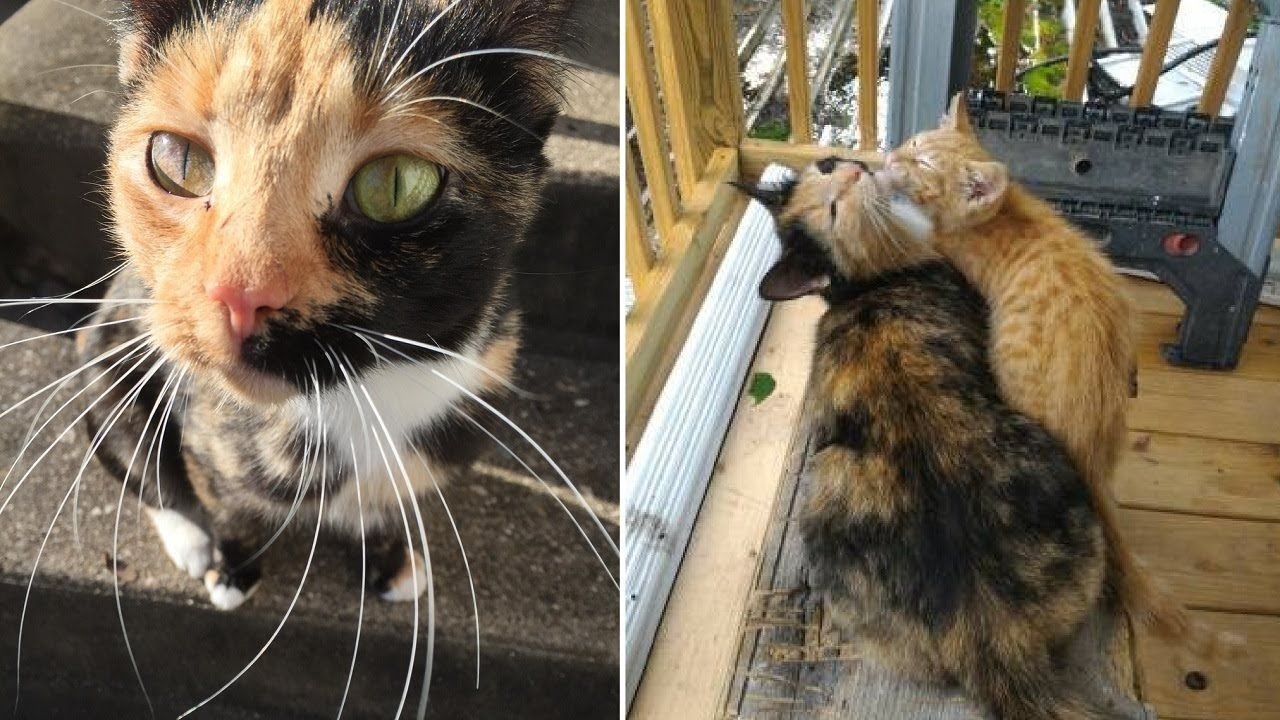 Stray Mama Cat Brings Her Injured Kitten To This Woman For Help Mama Cat Cat Mom Cats