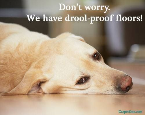 We Are Proud To Provide You And Your Four Legged Family Members