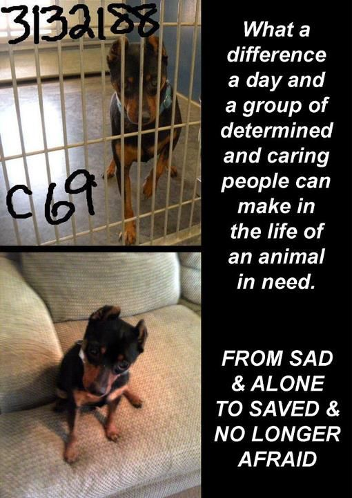 What a difference a day and a group of determined and caring people can make in the life of an animal in need.   From SAD and ALONE to SAVED and NO LONGER AFRAID