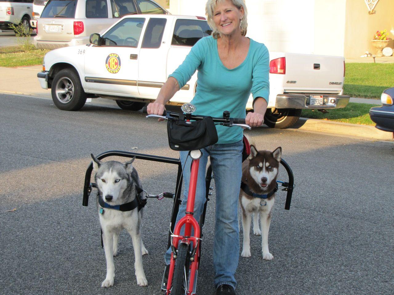 Pin By Eduardo Hanks On Dogdom Pets Dogs Dog Sledding