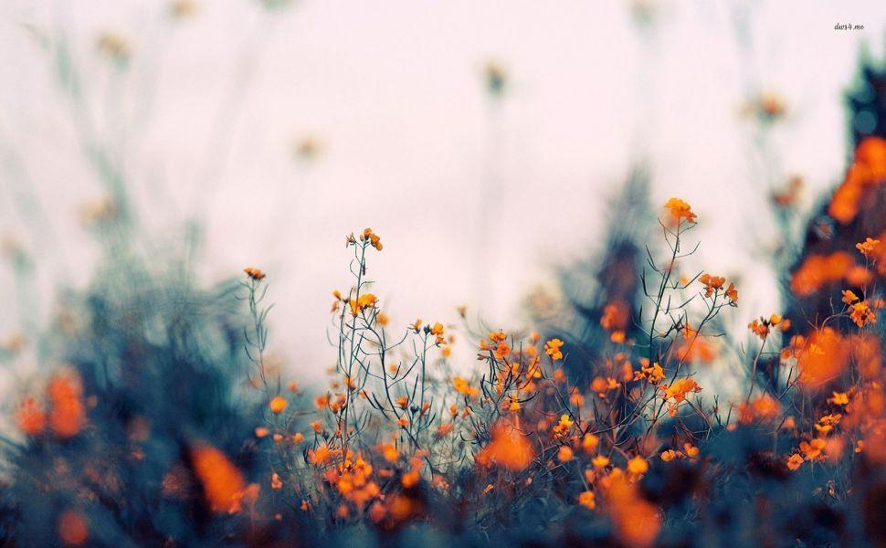 Small Orange Flowers Hd Wallpaper